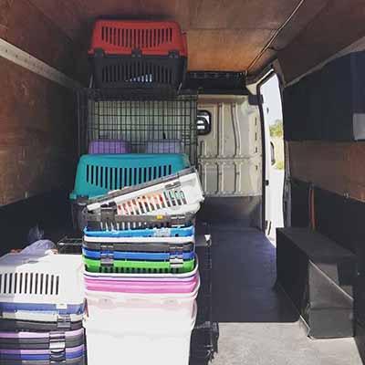 Şehirlerarası Evcil Hayvan Taşımacılığı